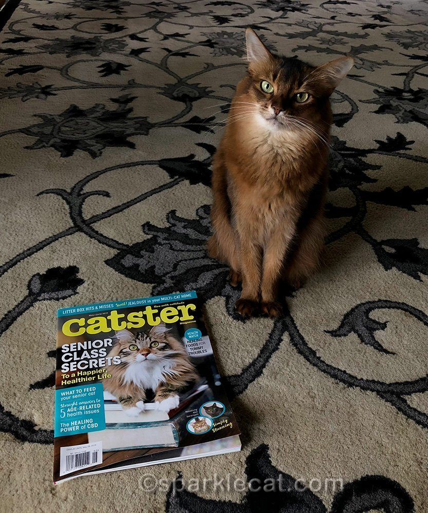 somali cat with May issue of Catster magazine