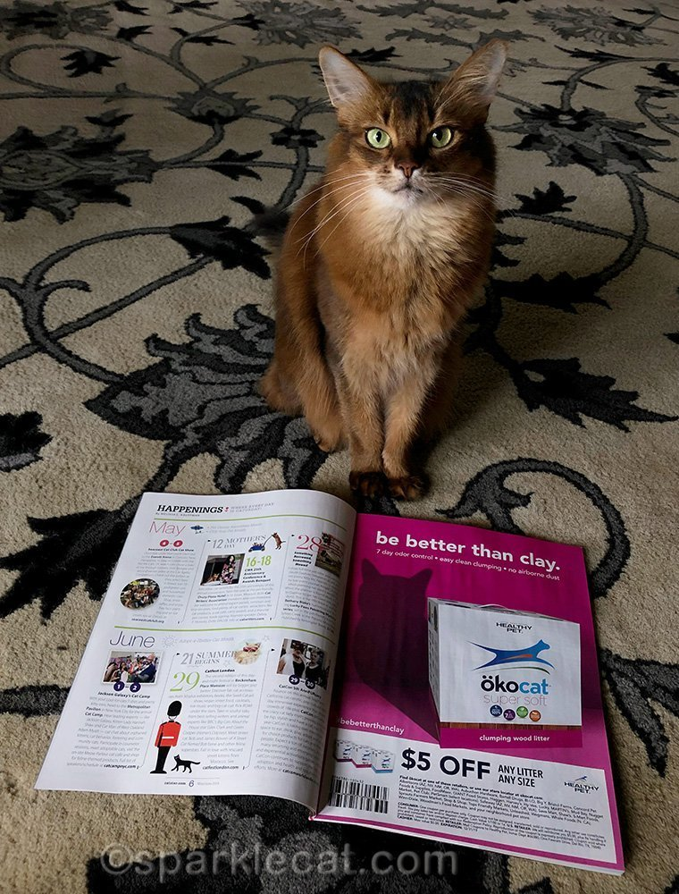 somali cat excited because her photo is in catster magazine