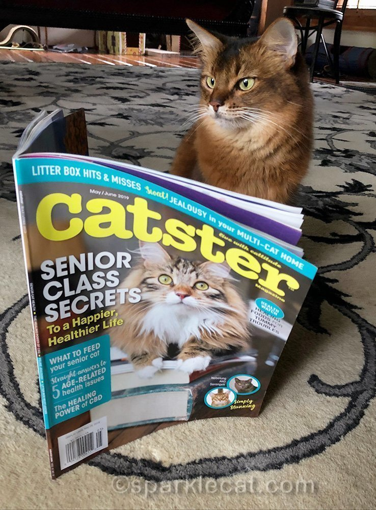 somali cat reading the May issue of Catster magazine