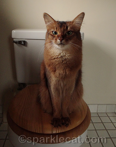 Cat pooping in house causes