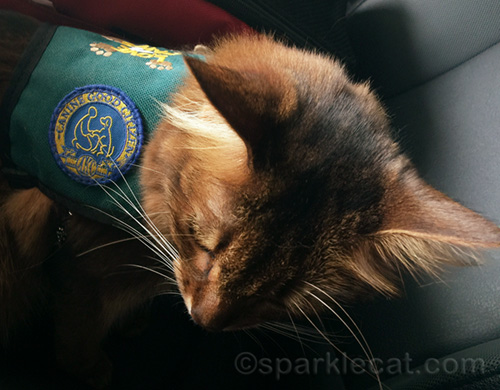 therapy cat with canine good citizen badge