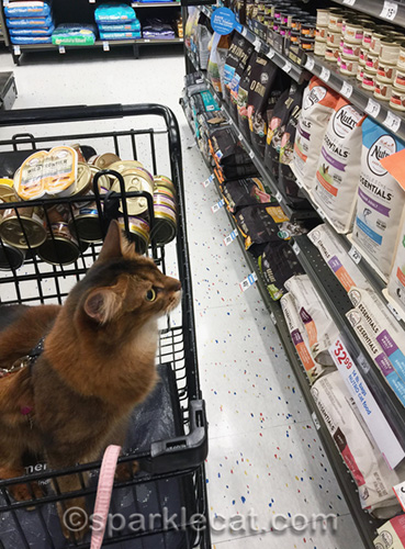 somali cat looking at cat food in pet store aisle
