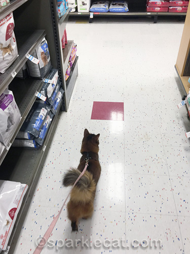 somali cat on leash, walking down aisle in pet store