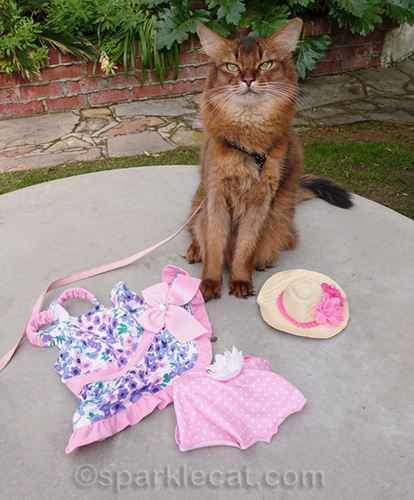 somali cat with her new clothes