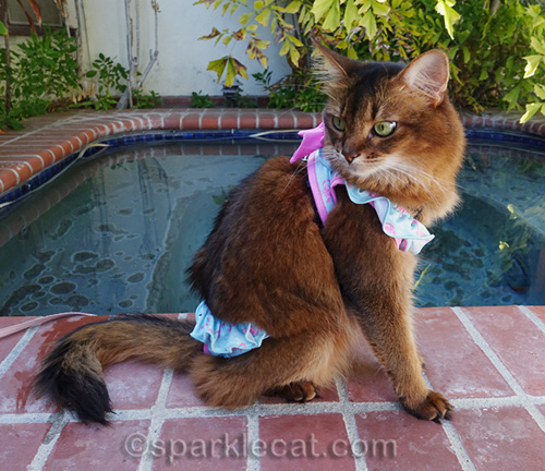 somali cat modeling bikini by jacuzzi