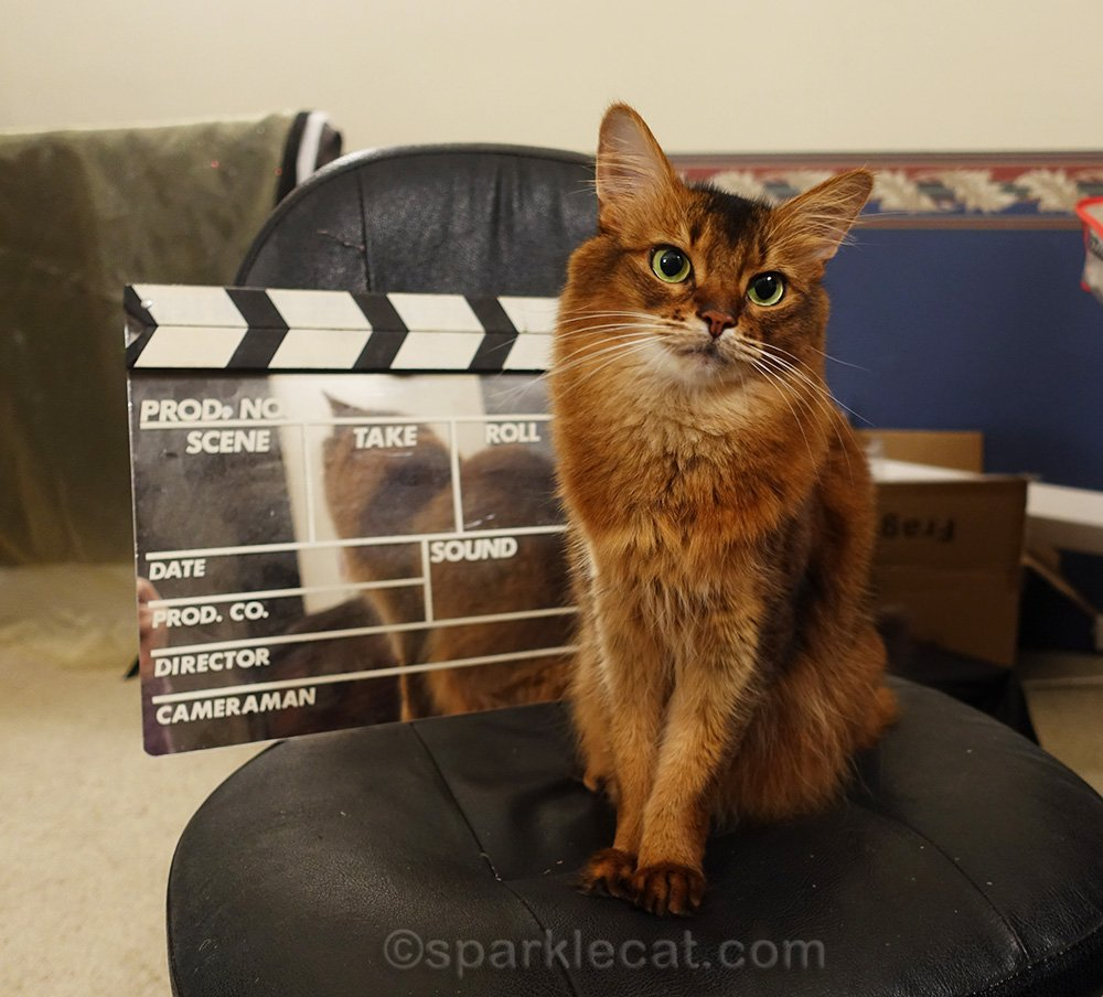 somali cat is getting her very own photo studio