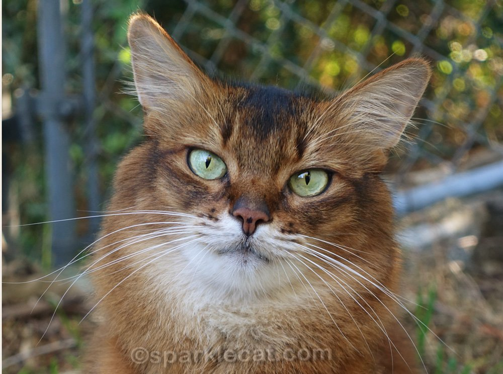 Summer tells the story behind her nose freckle, and about cat nose freckles in general.