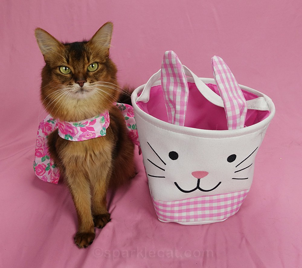 somali cat in dress sitting next to easter bunny basket