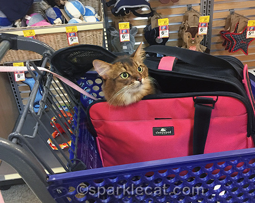 somali cat in a carrier inside a shopping cart