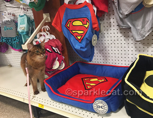 somali cat at pet store, looking at superhero pet apparel