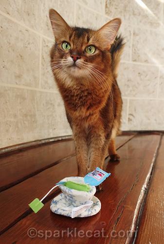 somali cat with catnip tea cup cat toy