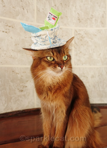 somali cat as Mad Catter