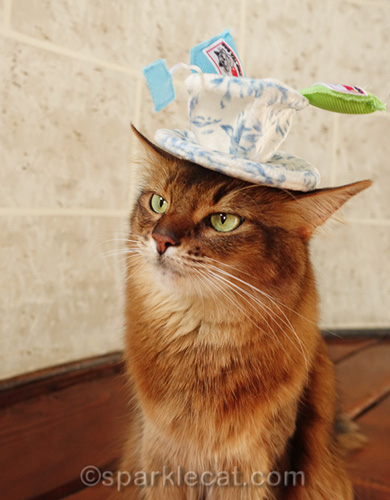 somali cat with cat toy on her head