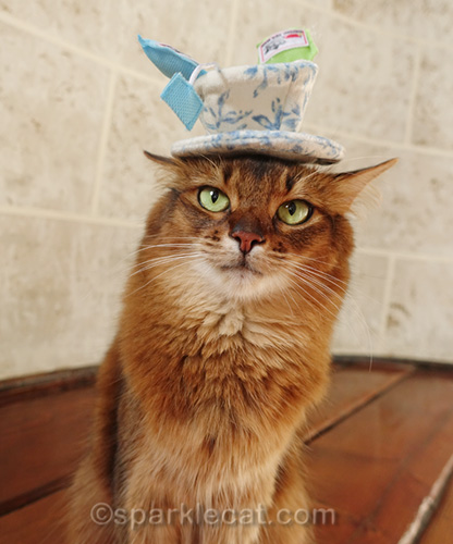somali cat with tea cup cat toy precariously balanced on her head