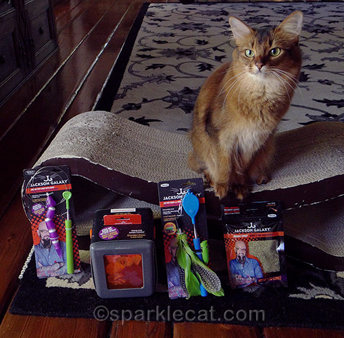 somali cat posing with the Jackson Galaxy collection cat toys by Petmate