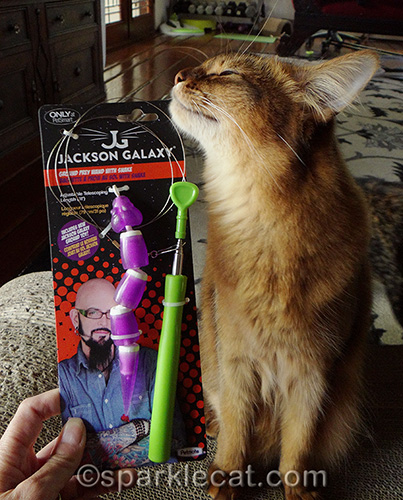 somali cat is excited about the Jackson Galaxy Ground Toy Wand with Snake