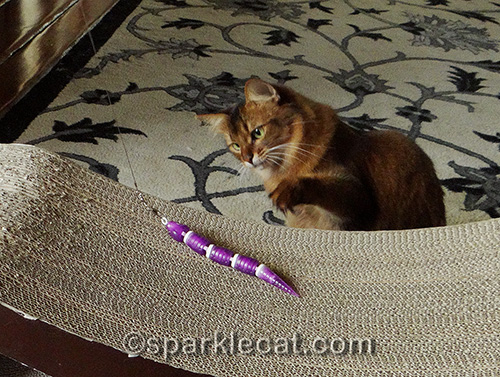 somali cat plays with the Jackson Galaxy Ground Prey Wand with Snake