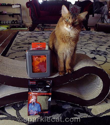 somali cat poses with Jackson Galaxy Vault Marinater and organic catnip
