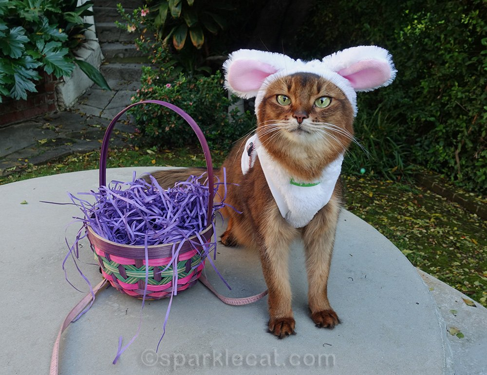 For this Easter, Summer gets to do an Easter egg hunt.