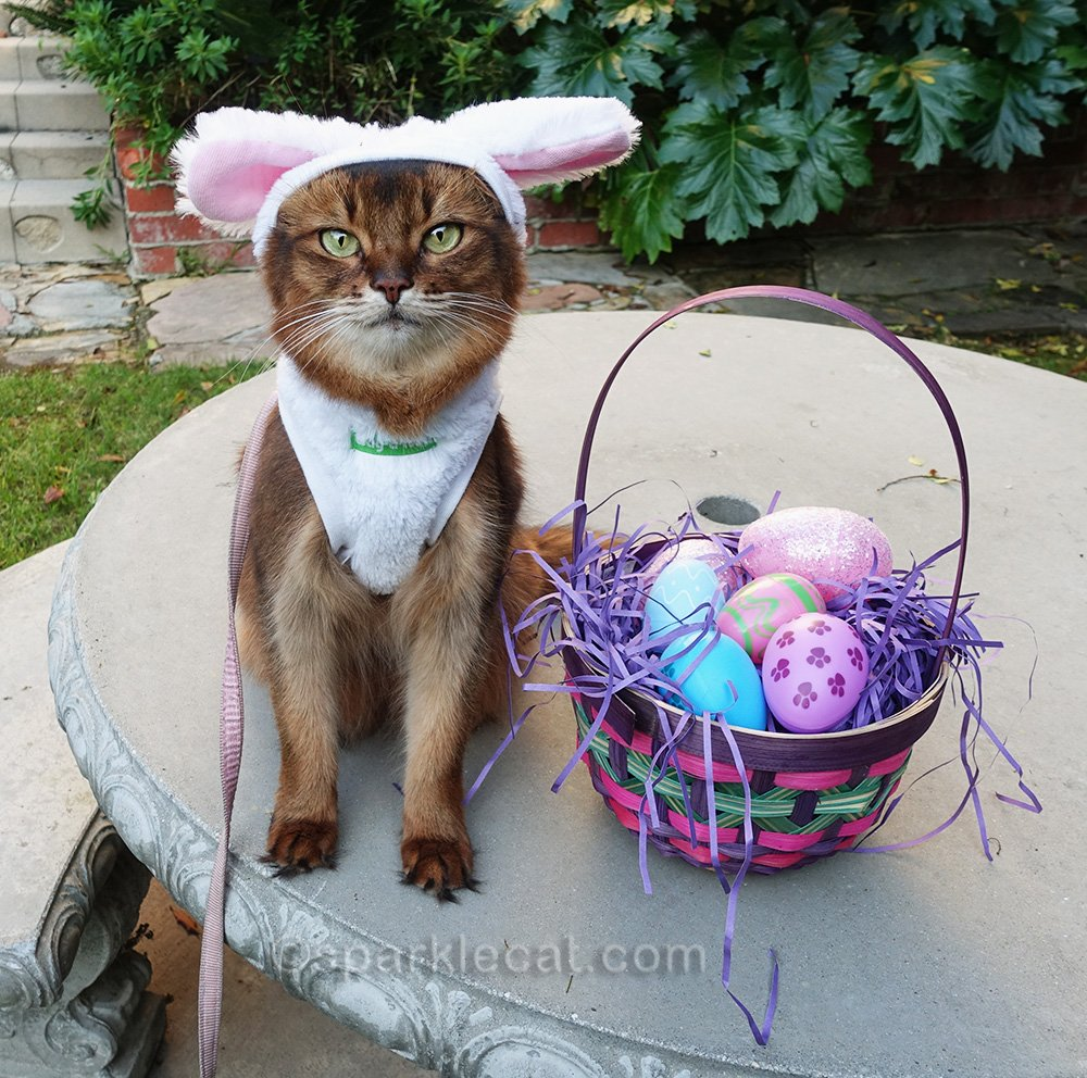 somali cat with full basket of easter eggs