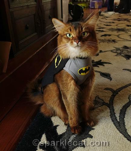 somali cat wearing BatCat t-shirt