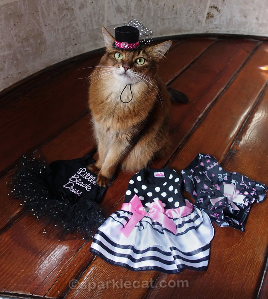 somali cat wearing hat and ready to try on dresses