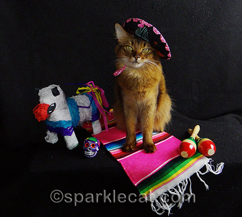 somali cat wearing sombrero, surrounded by Mexican props