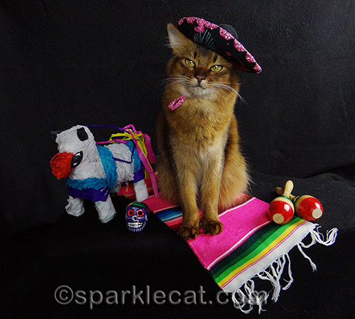 somali cat posing in sombrero with Mexican props