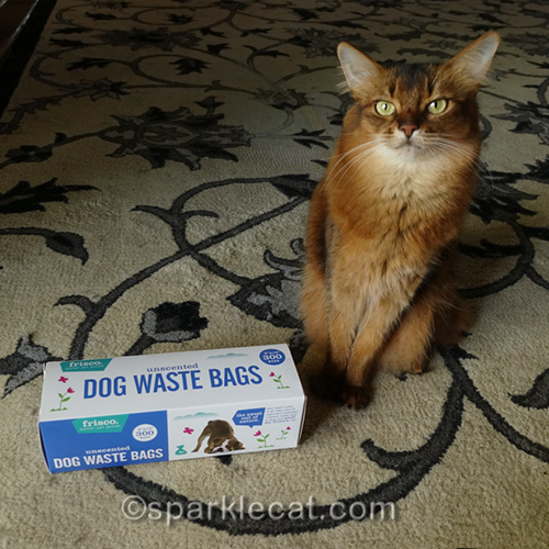 somali cat with Frisco Dog Waste Bags
