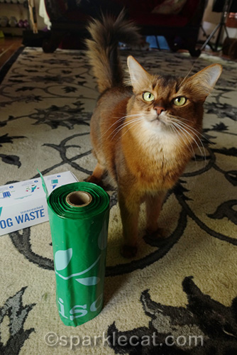 somali cat with dog waste bags