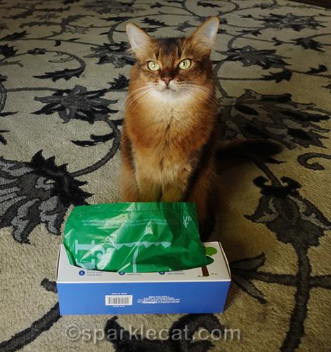 somali cat with die-cut dispenser