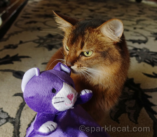 somali cat with Feliway puppet