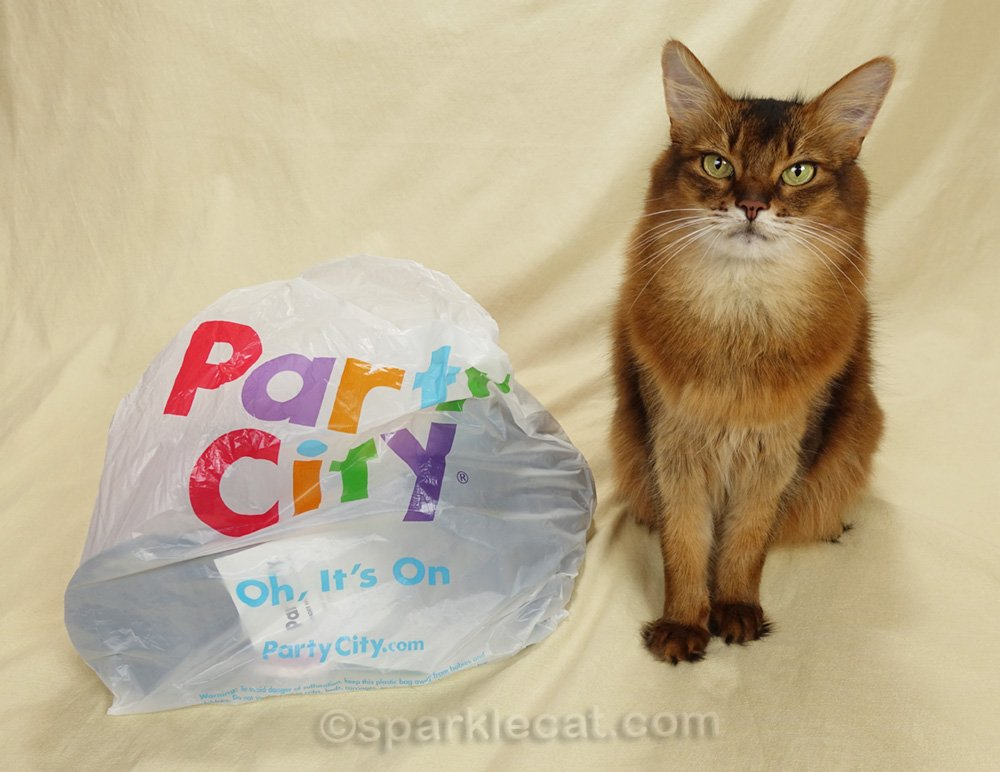 Summer's human goes to Party City and brings home props for future photo sessions. We get a sneak preview in this blog post.