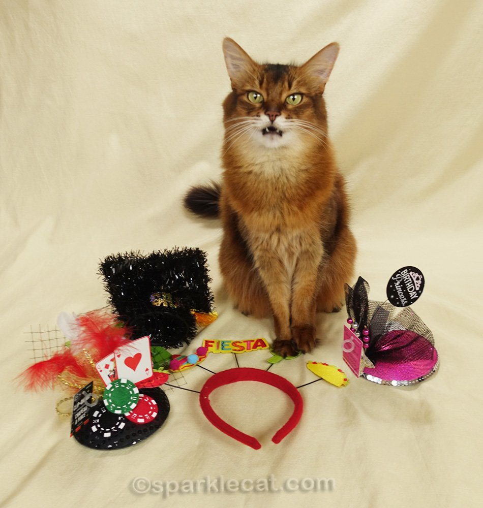 somali cat surprised by all the items her human brought home from Party City