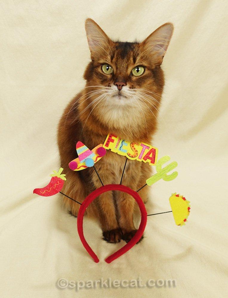 Somali cat with Cinco de Mayo headband
