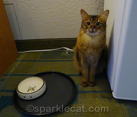 Is it dinnertime yet?