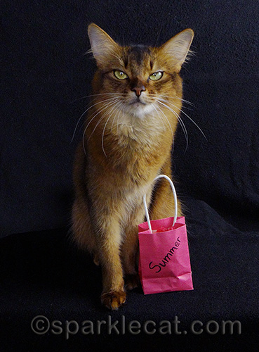 somali cat with pink cat-sized shopping bag