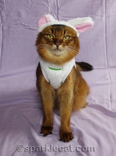 somali cat in bunnycat costume