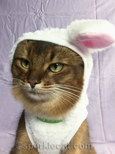 somali cat in bunnycat outfit getting ready to take a selfie