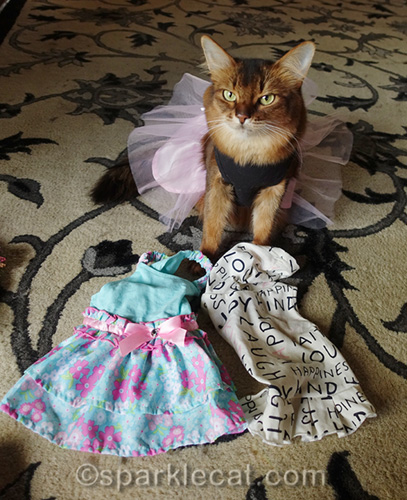 Summer chooses her casual wear for the BlogPaws Conference
