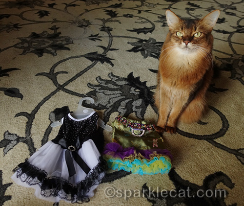somali cat with two red carpet dresses