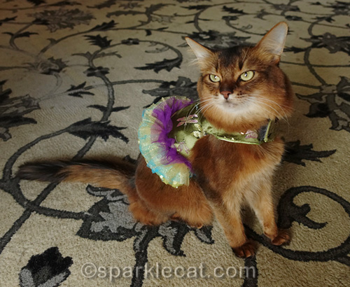 somali cat wearing green red carpet dress