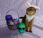 A Skull Head Easter