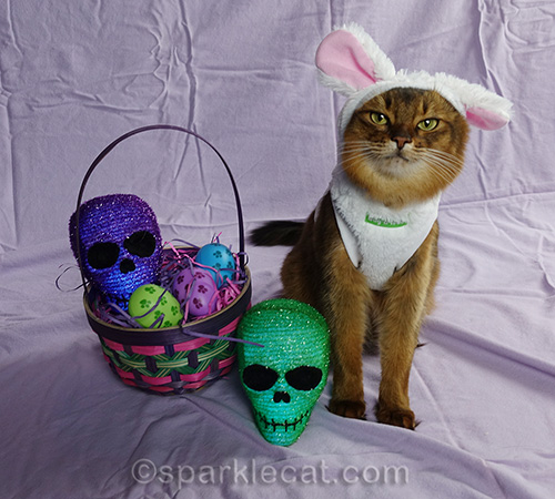 somali cat in bunny outfit posing with basket and easter skulls