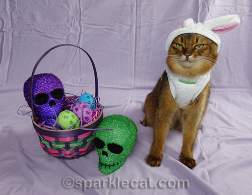 somali cat in easter setting with crooked bunny ears on costume
