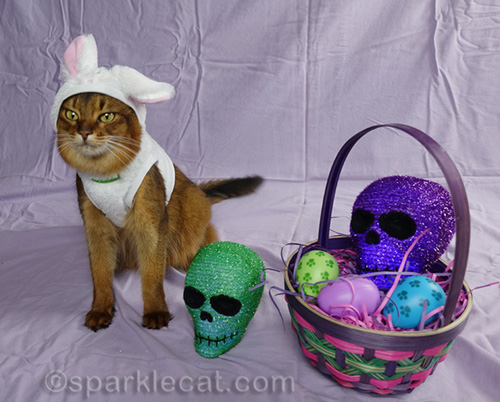 somali cat posing with skull head and easter basket