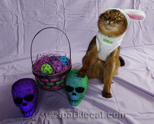 somali cat in bunny costume with her paw on a skull head