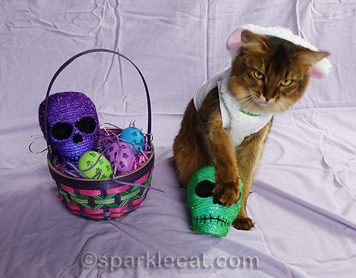 Outtake of somali cat posing in bunny costume with skull heads