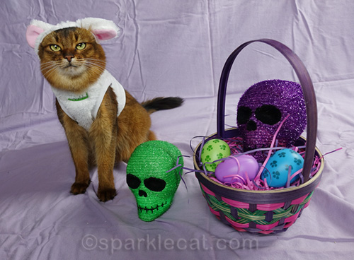 somali cat confused by the presence of skull heads with easter basket