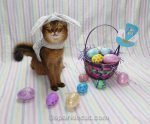 Somali cat dressed as a bunnycat for Easter photo shoot